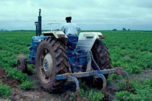 Importance of Agriculture in Nigeria Economic Development