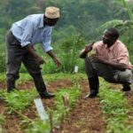 History Of Agricultural Extension in Nigeria