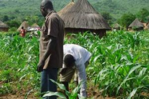 History of Agriculture In Nigeria (Problems & Prospects)